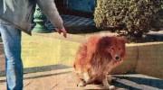 Murió el perro que vivió 9 años junto a la tumba de su dueño