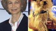 La reina Sofía adopta a Paquita, una perrita abandonada