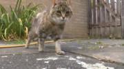 Pinky, con 28 años es la gata más vieja del mundo