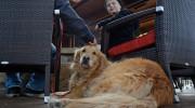 Ley permite a perros cenar con sus dueños en restaurantes