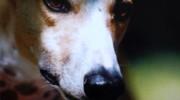«Figli del Vento»: historias de crueldad, amor y esperanza.