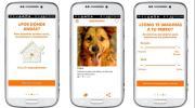 Buscacucha, el Tinder para perros y sus dueños
