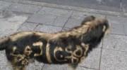Pintaron grafitis en un perro