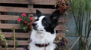 Cómo sabe tu perro si puede confiar en vos