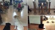Perros callejeros van al funeral de su cuidadora