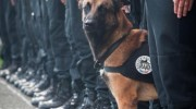 Muere Diesel una perra policía, en el atentado de Paris
