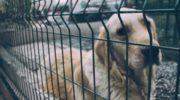 La historia de Manuel, el perro que no bajó los brazos