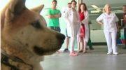 Maya, la perra que espera el alta de su dueña en la puerta del hospital