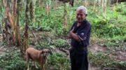 Costa Rica: se negó a abandonar a sus perros a merced del huracán Otto