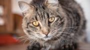 Los cuidados que tu gato necesita