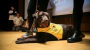Perros que ayudan: cuando los animales nos pueden sanar.