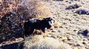 Conmovedor: murió congelado y su perro lo cuidó por 23 días