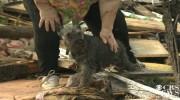 Perro de una anciana sobrevive al tornado de Oklahoma