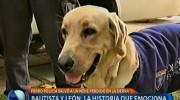 Perro Labrador salva a niño de 2 años en Tandil