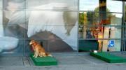 Estacionamiento para perros en una tienda de Alemania