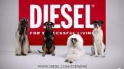 Perros reemplazan a modelos en campaña publicitaria de Diesel