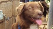 La increíble historia del perro callejero más caro del mundo