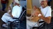 Un perro espera 8 días fuera de un hospital a que su dueño salga