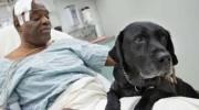 La conmovedora historia del perro que salvó a su dueño ciego