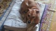Polémica en España: sacrificaron al perro Excalibur