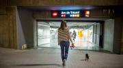 Los primeros perros que viajan en el metro de Barcelona