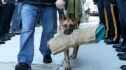 La emotiva despedida a un perro policía antes de ser sacrificado