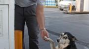 Georgina, la perra que vive en una estación de servicio