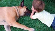 Perros y humanos, unidos por el cáncer