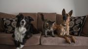 ¿Qué hacer cuando llega una mascota nueva al hogar?