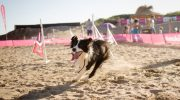 Otra gran temporada de YES playa canina!