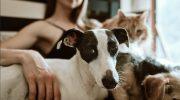 Mascotas: La importancia de una buena alimentación