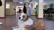 Proyecto en la Legislatura: Hospital para medio millón de animales